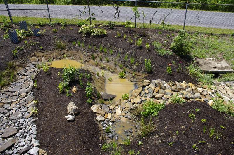 Rain Gardens: What They Are and How to Plant One